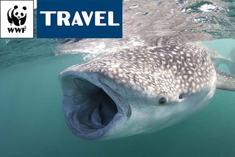 GIBUTI Whale Shark Expedition