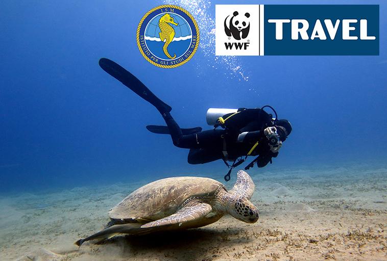 SHAMS ALAM turtle watch