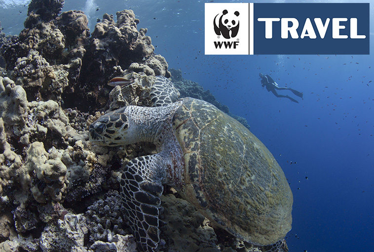 WADI LAHAMI turtle watch