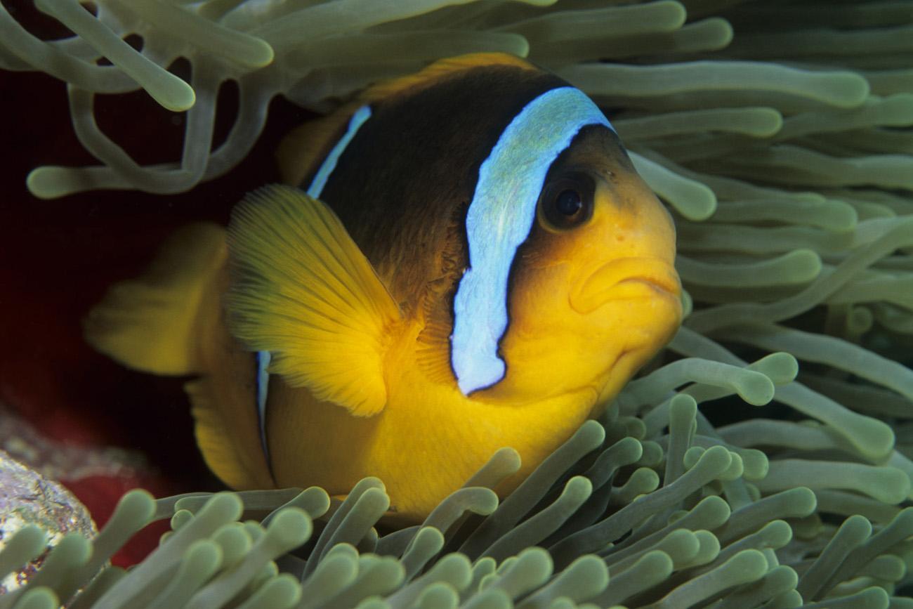 Quanto costa un pesce pagliaccio uncinetto for Quanto vive un pesce rosso