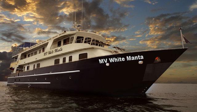 White Manta