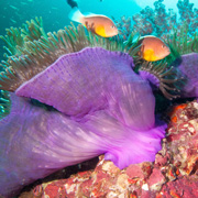 Similan e Richelieu