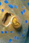 59 Ottobre 2007