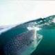 WHALE SHARK EXP. 2007