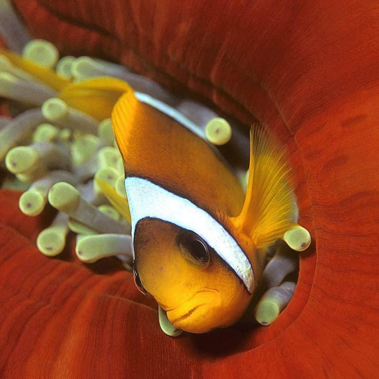 Seven Reefs e Five Sisters