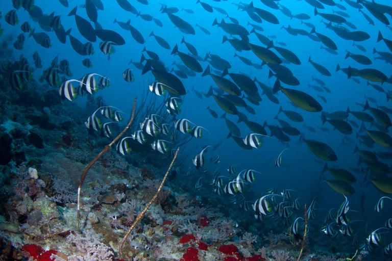 Yanbu e i Seven Reefs