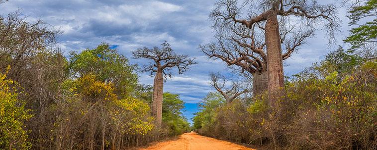 MADAGASCAR grande sud