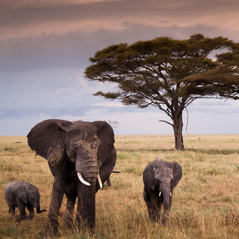 TANZANIA le pianure del Serengeti