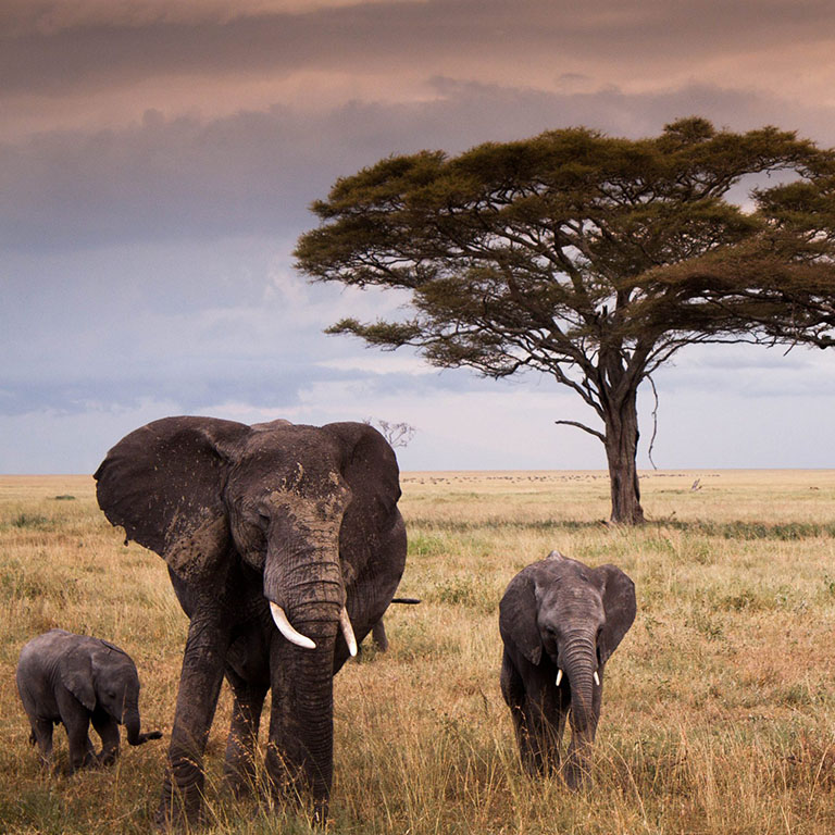 TANZANIA pianure del Serengeti
